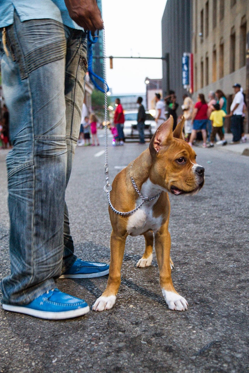Grabbed a shot of this pup (a boxer I think?) as we walked around the city before…