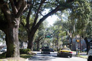 Tree lined street in Savannah, GA